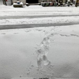 2月の雪。午後からパソコン教室、夜はオカリーナ・グループのレッスン。